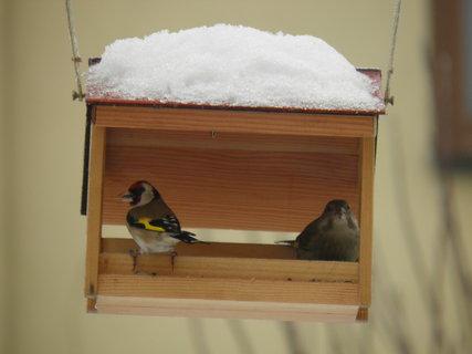 FOTKA - Ptáci v zimě 64