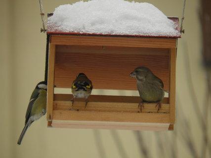 FOTKA - Ptáci v zimě 66