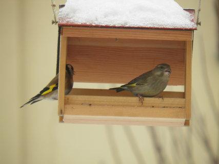 FOTKA - Ptáci v zimě 67