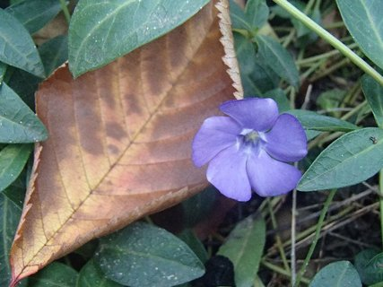 FOTKA - kvitne vonku pri chodníku
