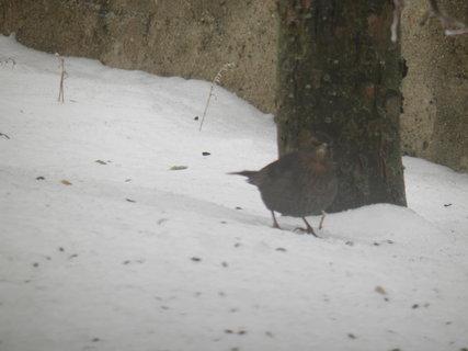 FOTKA - Ptáci v zimě 71
