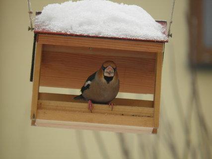 FOTKA - Ptáci v zimě 77