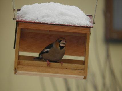 FOTKA - Ptáci v zimě 78