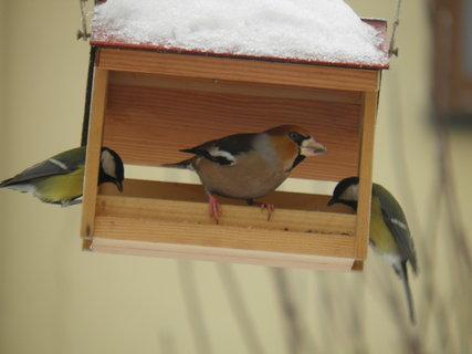FOTKA - Ptáci v zimě 80