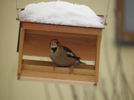FOTKA - Ptáci v zimě 81