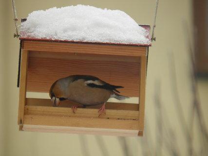 FOTKA - Ptáci v zimě 83