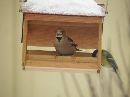 FOTKA - Ptáci v zimě 84