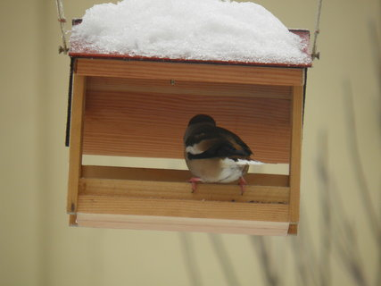 FOTKA - Ptáci v zimě 86
