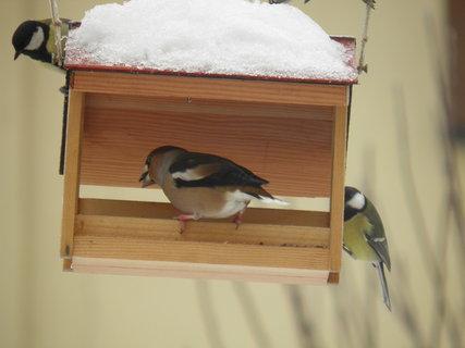FOTKA - Ptáci v zimě 88