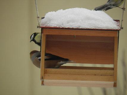 FOTKA - Ptáci v zimě 89