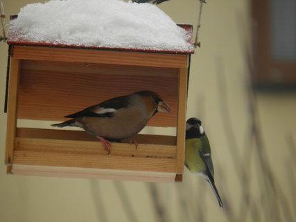 FOTKA - Ptáci v zimě 90