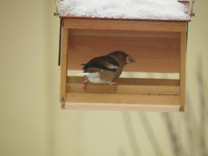 FOTKA - Pt�ci v zim� 92