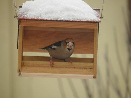 FOTKA - Pt�ci v zim� 93