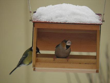 FOTKA - Ptáci v zimě 94