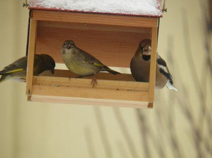 FOTKA - Ptáci v zimě 100
