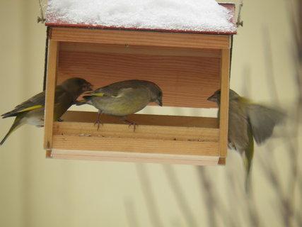 FOTKA - Ptáci v zimě 103