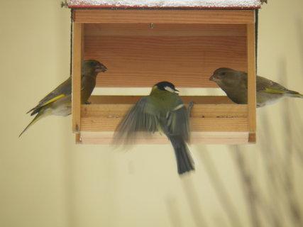 FOTKA - Ptáci v zimě 104