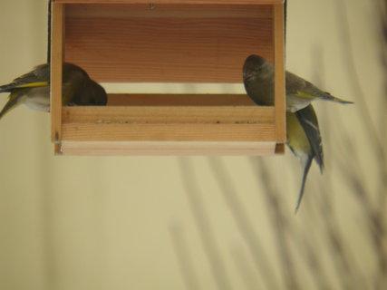 FOTKA - Ptáci v zimě 105