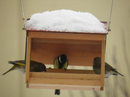 FOTKA - Ptáci v zimě 106