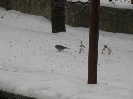 FOTKA - Ptáci v zimě 109
