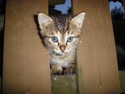 FOTKA - kočky u dcery 1