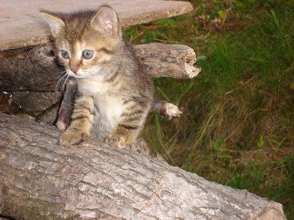 FOTKA - kočky u dcery 2