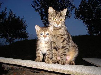 FOTKA - kočky u dcery  3