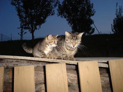 FOTKA - kočky u dcery  4