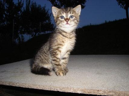 FOTKA - kočky u dcery  5