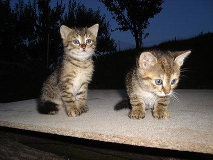 FOTKA - kočky u dcery  6
