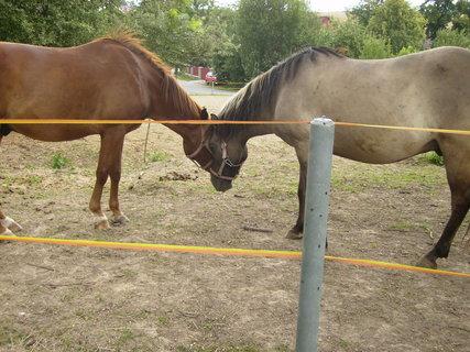 FOTKA - když se zamiluje kůň