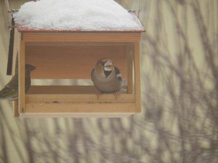 FOTKA - Ptáci v zimě 111