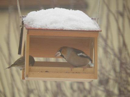 FOTKA - Ptáci v zimě 112