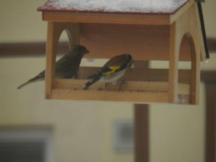 FOTKA - Ptáci v zimě 115