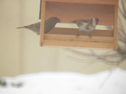 FOTKA - Ptáci v zimě 119