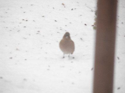 FOTKA - Ptáci v zimě 121