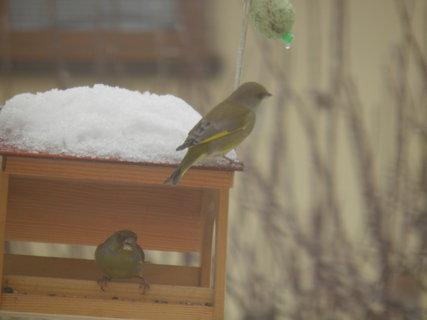 FOTKA - Pt�ci v zim� 122