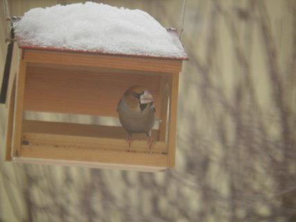 FOTKA - Ptáci v zimě 124