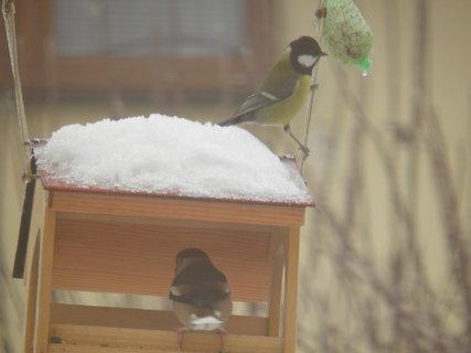FOTKA - Ptáci v zimě 125