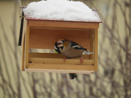 FOTKA - Ptáci v zimě 127