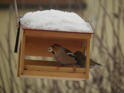 FOTKA - Ptáci v zimě 128