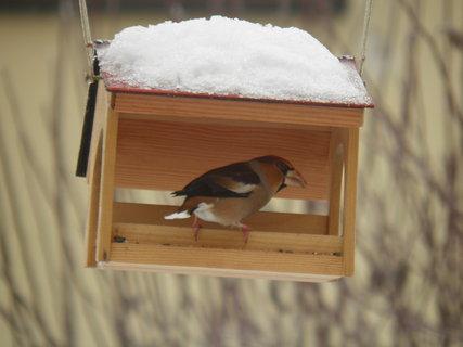 FOTKA - Ptáci v zimě 129