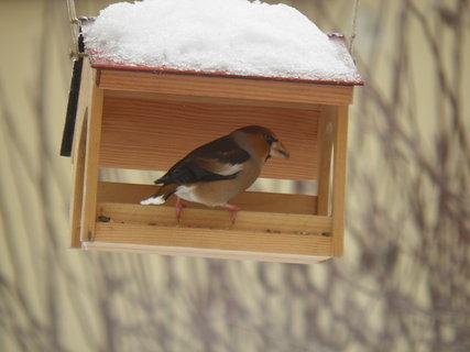 FOTKA - Ptáci v zimě 130