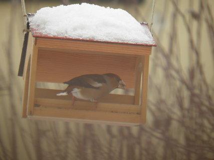 FOTKA - Ptáci v zimě 131