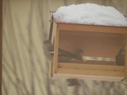 FOTKA - Ptáci v zimě 132