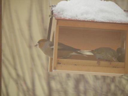 FOTKA - Ptáci v zimě 133