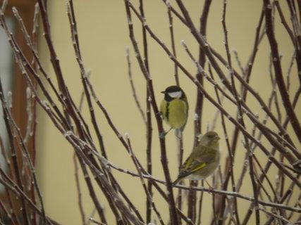 FOTKA - Ptáci v zimě 134