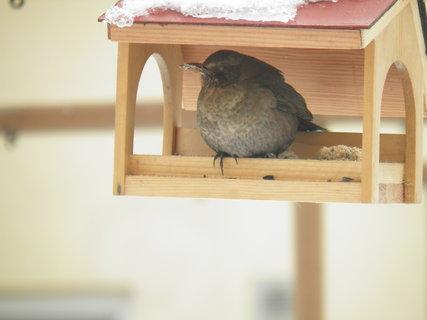 FOTKA - Ptáci v zimě 135