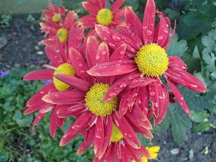 FOTKA - kvapky na kvetoch