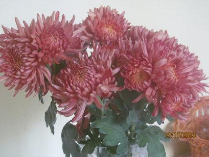 FOTKA - Detail květů